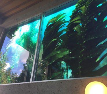 kelpforest_6