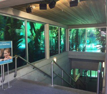 kelpforest_8